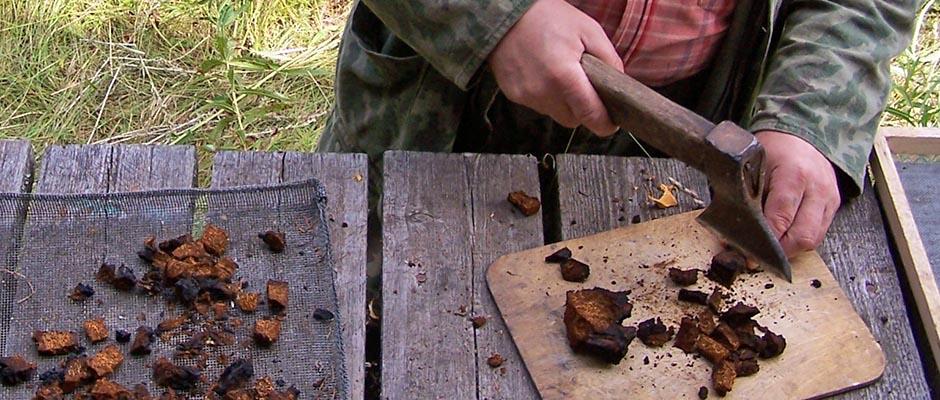 Как сделать заварку из чаги
